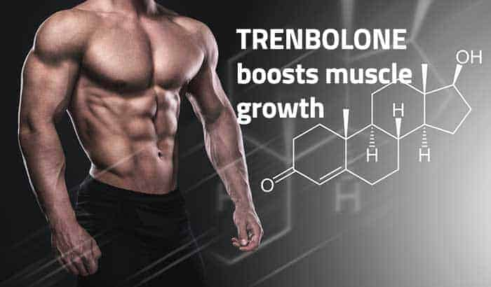 Trenbolone muscle growth and bodybuilding