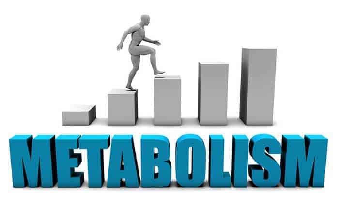 fat burners that increase metabolism